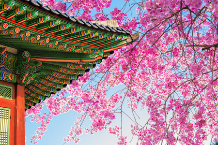Cherry Blossom with roof of temple in spring. 免版税图像