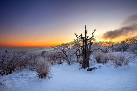 toter baum: Silhouette von toten B�umen, sch�ne Landschaft bei Sonnenaufgang am Deogyusan Nationalpark im Winter, S�dkorea.