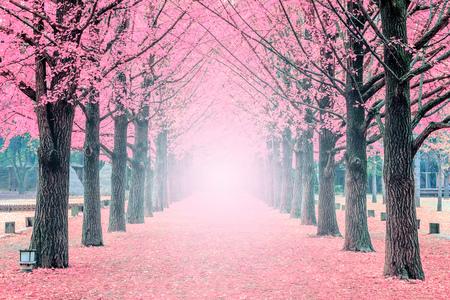 ピンクのツリー、韓国南怡島