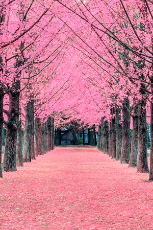Roze boom, Nami Island in Korea