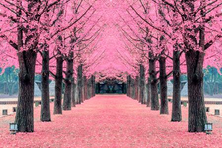 핑크 트리, 한국의 남이섬