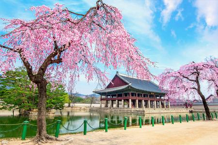 春、韓国の首都ソウルの桜と景福宮。 報道画像