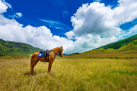 horse in field. Stock Photo