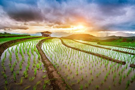 치앙마이, 태국에서 금지 paong piang의 테라스 쌀 필드. 스톡 콘텐츠