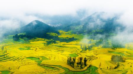 카 놀라 필드, Luoping, 중국에서 아침 안개와 유채 꽃 필드. 스톡 콘텐츠