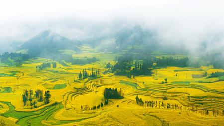 Canola veld, koolzaad bloemveld met ochtend mist in Luoping, China. Stockfoto