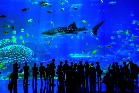 Silhouettes of people looking at fish in huge Aquarium, Zhuhai, China.