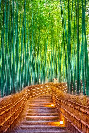 Bamboo Forest in Kyoto, Japan. Standard-Bild