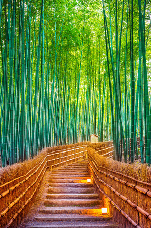 Bamboo Forest in Kyoto, Japan. Foto de archivo