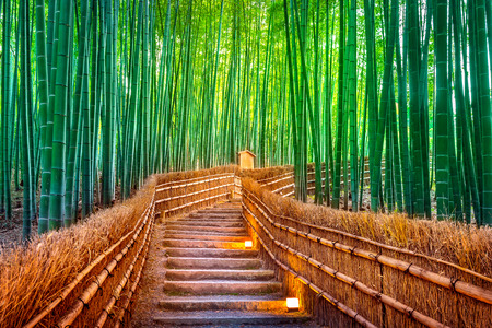 Bamboo Forest in Kyoto, Japan. Stok Fotoğraf