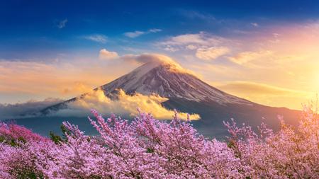 Góra Fuji i wiśniowe kwiaty na wiosnę, Japonia. Zdjęcie Seryjne