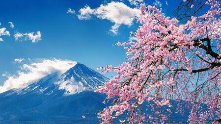 Mont Fuji et cerisiers en fleurs au printemps, au Japon.