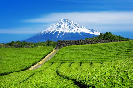 Fuji-Berge und Grüntee-Plantage in Shizuoka, Japan. Standard-Bild