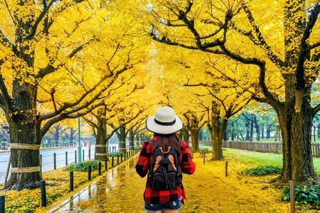 Woman traveler with backpack walking in Row of yellow ginkgo tree in autumn. Autumn park in Tokyo, Japan. Archivio Fotografico