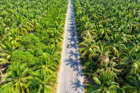 Aerial view of coconut palm trees plantation and the road. Stock fotó