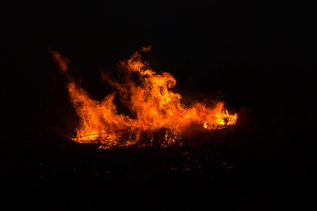 Twigs burning at park in thailand disaster in bush forest with fire spreading in dry woods. Stock Photo