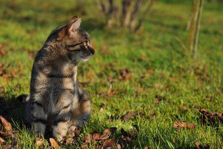 Tabby cat in the autumn garden Stock Photo