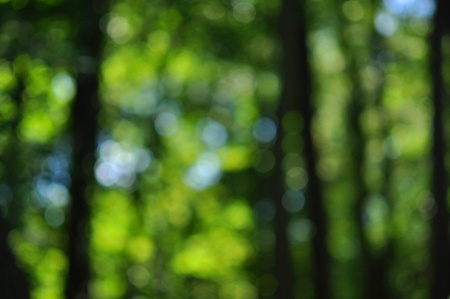 Green natural background of out of  focus forest  or bokeh Stock Photo - 11357414