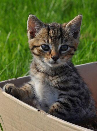 Tabby kitten in box in the garden