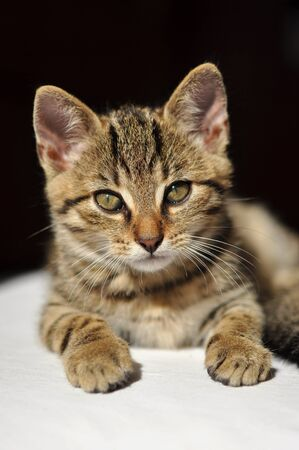 Lovely tabby kitten looking directly into the camera Stock Photo