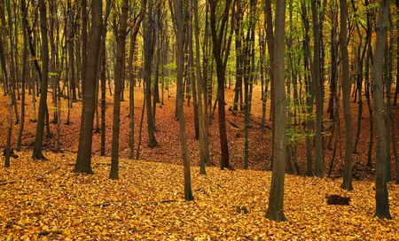 Autumn forest with trees and yellow and green leaves on the ground