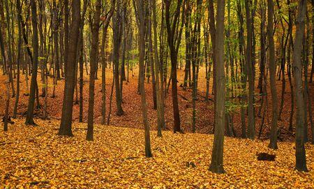 Outono floresta com árvores e folhas verdes e amarelas no chão