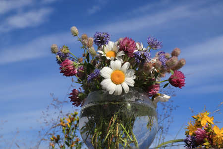 Bouquet of wild flowers (chamomile, hare's-foot clover, zigzag clover, sheep's bit scabious, perforate St John's-wort) in a round vase against the sky Stock fotó - 152476133