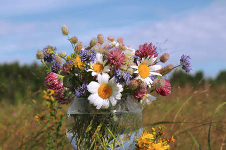 Bouquet of wild flowers (chamomile, hare's-foot clover, zigzag clover, sheep's bit scabious, perforate St John's-wort) in a round vase in the field