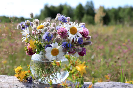 A bouquet of wild flowers (chamomile, hare's-foot clover, zigzag clover, sheep's bit scabious, perforate St John's-wort) in a round vase in the field