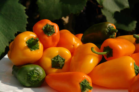 Colorful assortment of mini bell peppers of the 'Lunchbox' variety (sweet snacking pepper). Raw organic yellow, orange and green peppers on a white plate in the garden