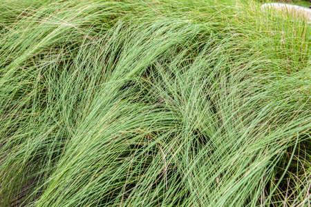 modello erba in giardino