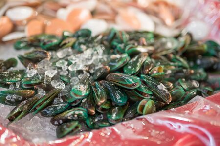 molluscs: Mussels - selective focus