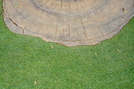 lumbering: top view tree stump on the green grass texture background
