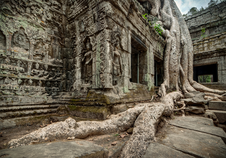 phrom: Root over the roof af Ta Phrom temple, ancient Khmer architecture Stock Photo