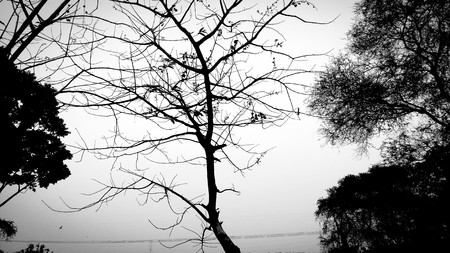 black and white shot of a tree