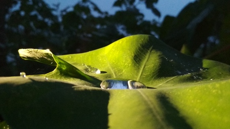 waterdrop in a leaf under 3 artificial lighting