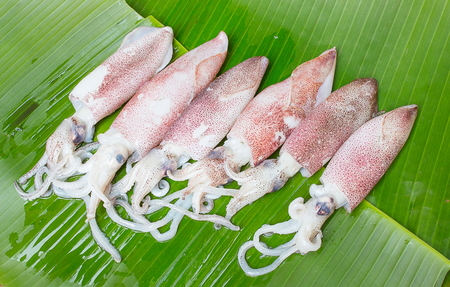 squids: select focus Squids raw on banana leaf background