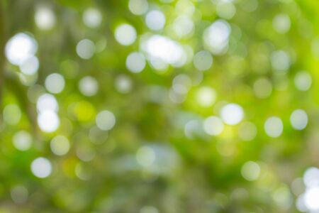 Abstract natural color background. Natural Bokeh,Fresh green background with abstract blurred foliage and bright summer sunlight.