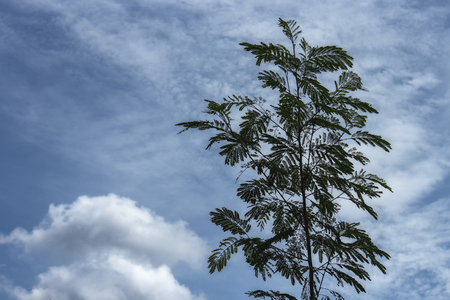 tree under blue sky, Image Low Key tree  : Ideal use for background :