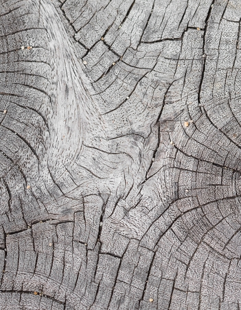 resulted: Cracked wood background, An old tree stump shows cracks and fractures radiating from the center that have resulted from the natural weathering from being left in the open air. Stock Photo
