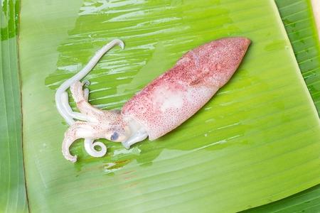 squids: One Squids raw on banana leaf background.