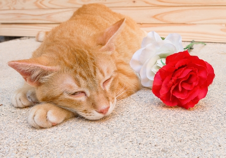 Orange cat sleeping Peaceful near a flower and notebook , select focus  cat sleeping Stock Photo