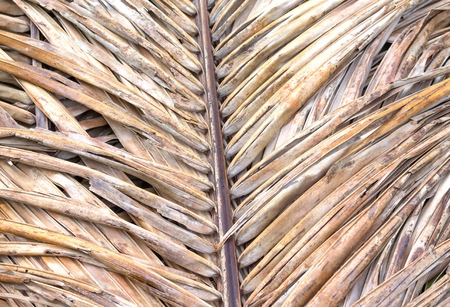 nervure: Old coconut leaf dried. that overlap pile. Abstract background of dried coconut leaves