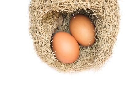 weaver bird: Skylark Nests and egg, Close up Baya weaver bird nest, skylark nests on white background.(select focus front egg in skylark nests ) Stock Photo