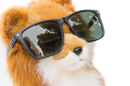 흰색 배경에 아름 다운 인형 개 검은 선글라스