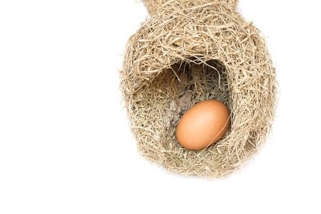 Skylark Nests and egg, Close up Baya weaver bird nest, skylark nests on white background.(select focus front egg in skylark nests ) Stock Photo