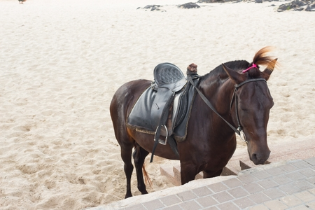 Horse in sand on the beach. Stock Photo
