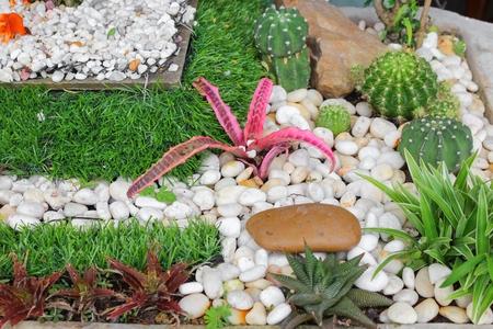 garden in tray beautiful ,miniature plants