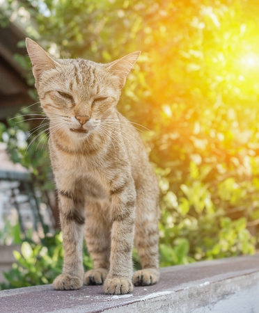 Cat, grey  with pitiable sad eyes. and colorful blur background with sunset light tone. Stock Photo