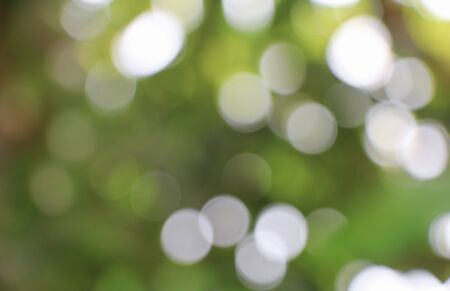 Bokeh natural color  warm background. Filter leaf of the tree fresh green , abstract  blurred foliage and bright summer sunlight. with copy space.